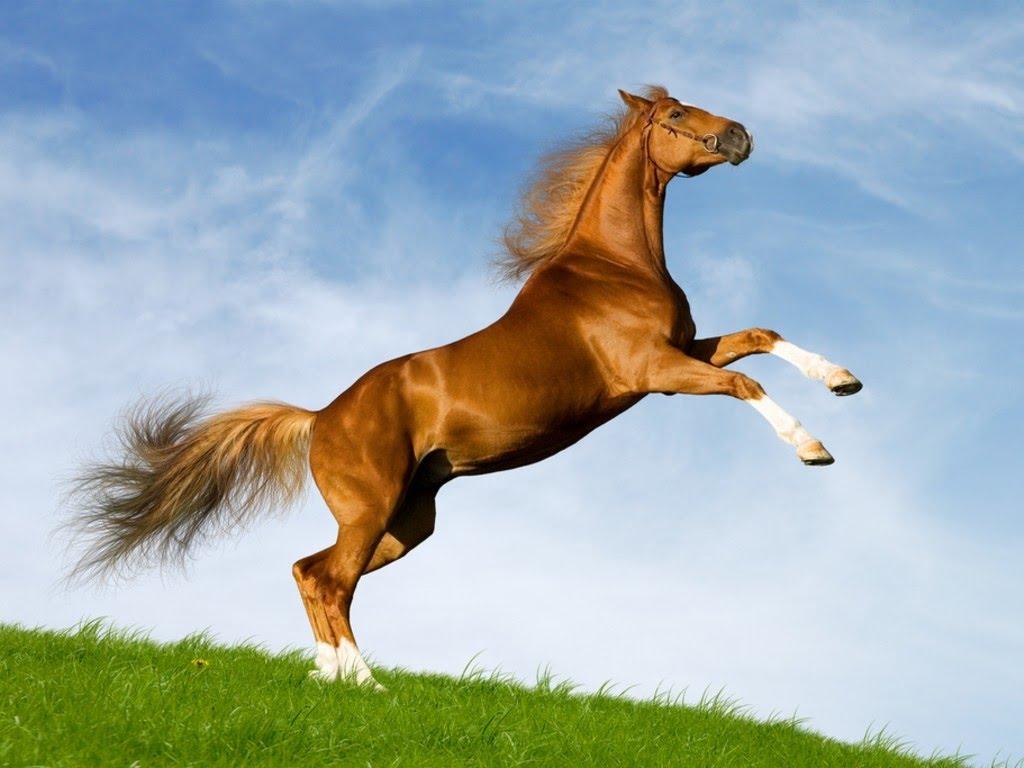 Chiêm bao thấy con ngựa