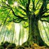 mơ thấy rừng cây