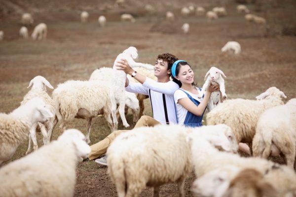 Ngủ mơ thấy những chú cừu có điềm báo gì