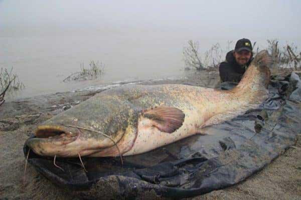 Nằm mơ thấy cá nheo mang đến điềm báo gì?